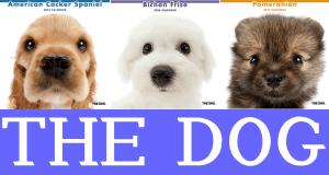 犬カレンダー